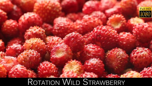 Cover Image for Rotation Wild Strawberry