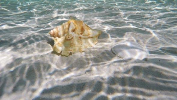Muschel unter Wasser