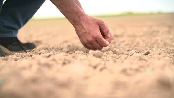 Thumbnail for Seeding, Planting