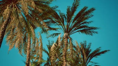 View of the Palm Trees Passing By Under Blue Skies