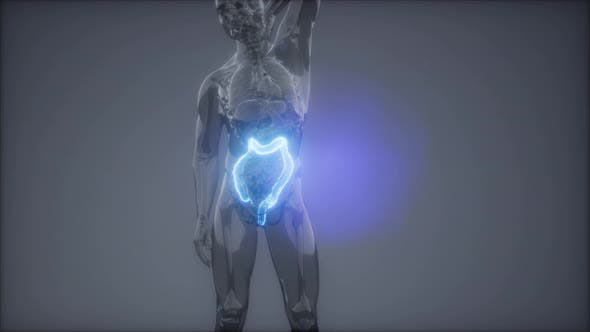 Human Colon Radiology Exam