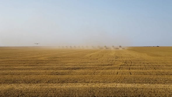 Thumbnail for Many Harvesters. Wheat Harvest. The Plane Flies Over a Field.