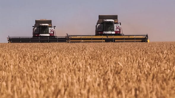 Thumbnail for Many Harvesters. Wheat Harvest.