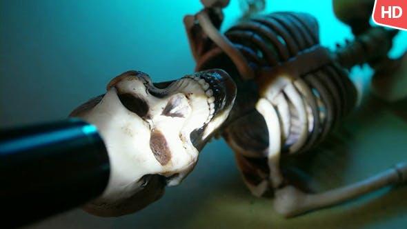 Human Skeleton 0203
