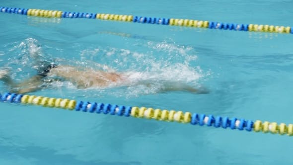 Swimming Competition. Swimmer Swims To The Finish.