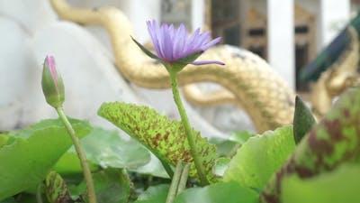 Purple Flower In Bangkok