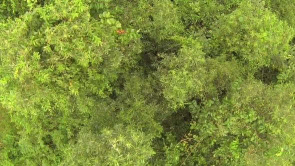 Thumbnail for Thai Jungle Trees, Aerial View From Above