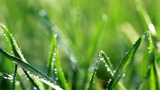 Thumbnail for Fresh Green Grass With Dew Drops