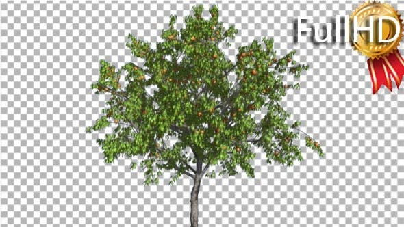 Thumbnail for Peach Thintrunk Tree Green Leaves and Yellow