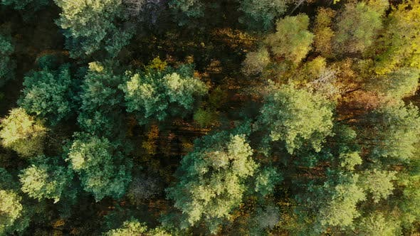 Thumbnail for Top view of the autumn forest.