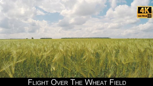 Thumbnail for Flight Over The Wheat Field 5