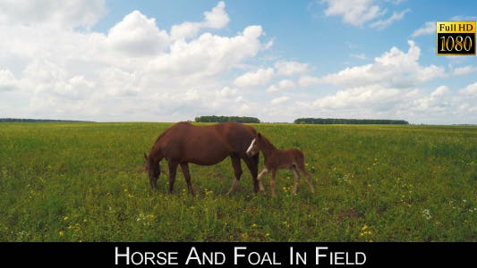 Thumbnail for Horse And Foal In Field