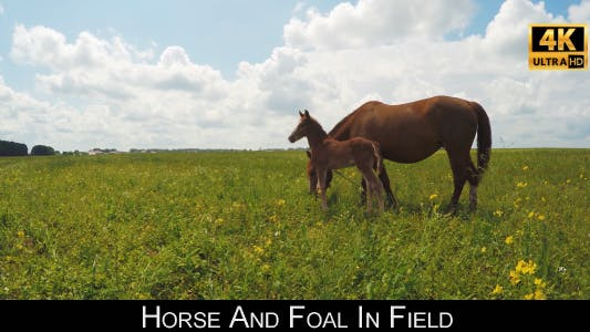 Cover Image for Horse And Foal In Field 2