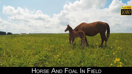 Thumbnail for Horse And Foal In Field 2