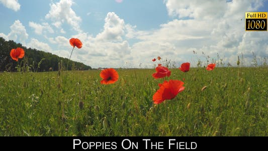 Thumbnail for Poppies On The Field