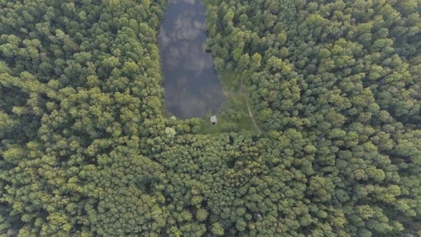 Thumbnail for Aerial view.Flying Over The Forest