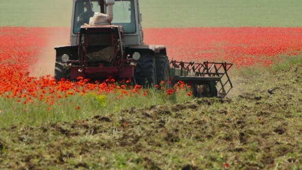 Thumbnail for Tractor Mowing Poppy Field
