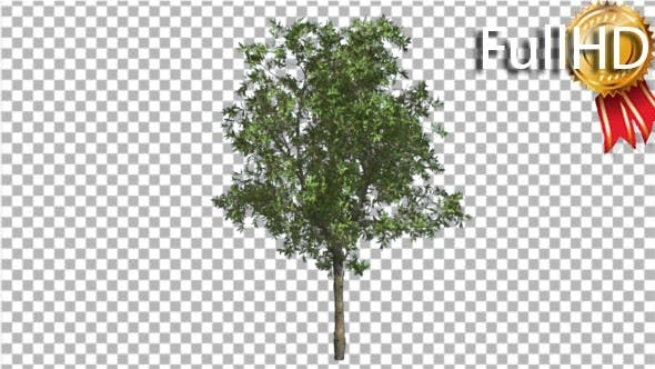 Thumbnail for Orange Tree Small Thin Tree Swaying at the Wind