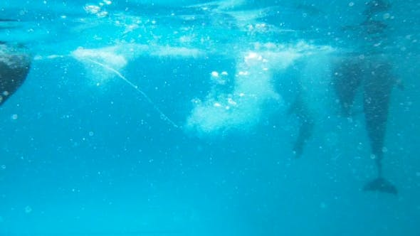 Several Dolphins Swim Lying On His Back