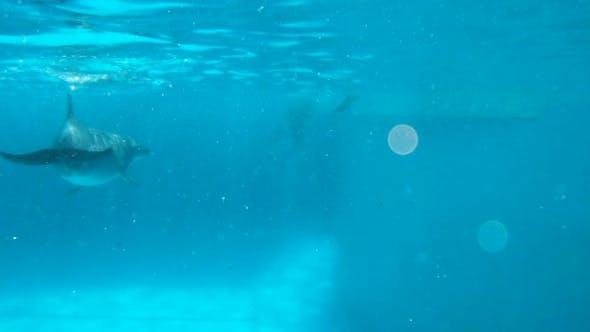 Curious Dolphins