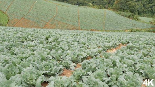 Thumbnail for Vegetable Farm
