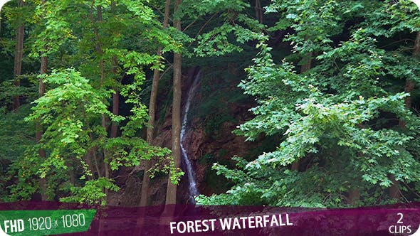 Thumbnail for Forest Waterfall