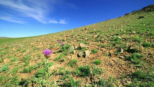 Thumbnail for Snowdrop Wildflowers Growing in Steppe