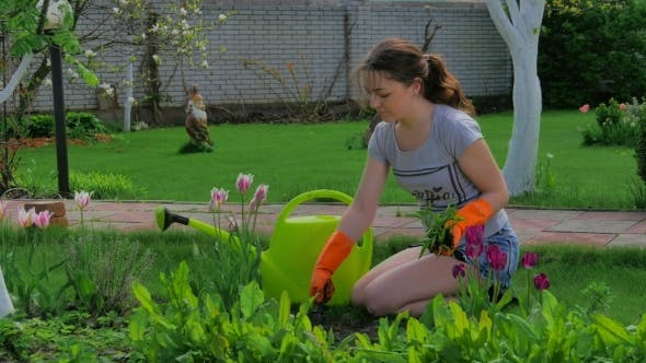 Thumbnail for Young Girl Planting Flowers in the Garden