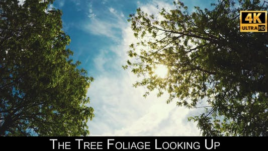 Cover Image for The Tree Foliage Looking Up 8