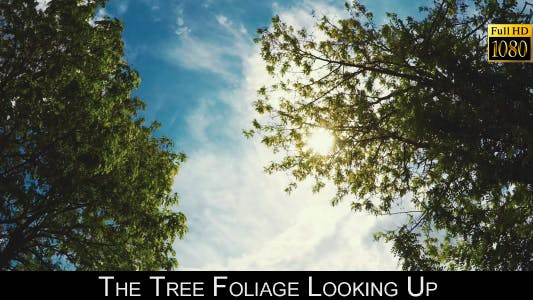 Thumbnail for The Tree Foliage Looking Up 8