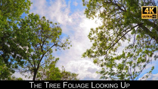 Cover Image for The Tree Foliage Looking Up 9