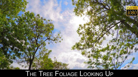 Thumbnail for The Tree Foliage Looking Up 9