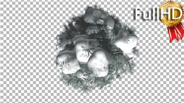 Thumbnail for Blue Spruce Top Down Snow on a Branches Winter