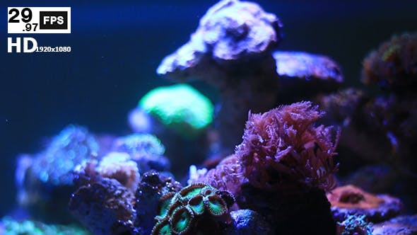 Thumbnail for Coral V3