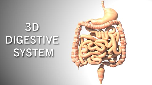 Thumbnail for 3D Digestive System