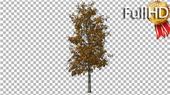 Thumbnail for Sourwood Tree is Swaying at the Wind Yellow Tree
