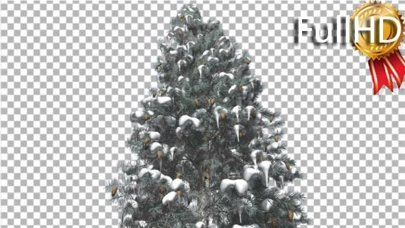 Cover Image for Blue Spruce Snow on a Branches Tree With Cones