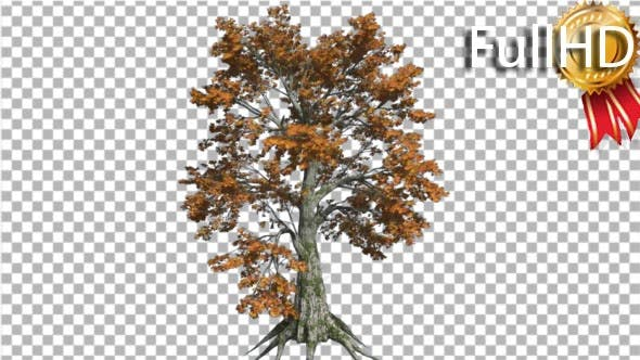 Thumbnail for Sassafras Tree is Swaying at the Wind Yellow Tree