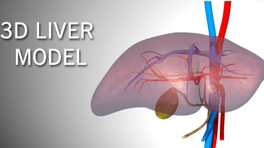 Thumbnail for 3D Liver Model