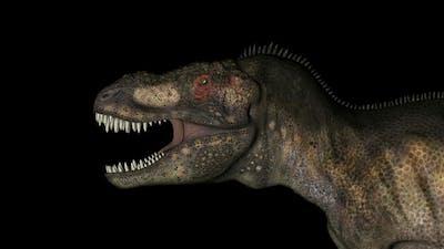 Head of Tyrannosaurus Dinosaur