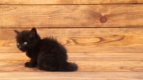 Thumbnail for Little Black Cat