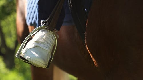 Foot Inserted in the Stirrup on the Horse