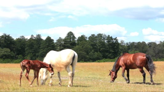 Thumbnail for Horse And Foal On Pasture 5
