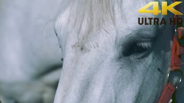Thumbnail for White Horse Standing and Looks Around