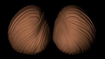 Cerebellum of a Human Body
