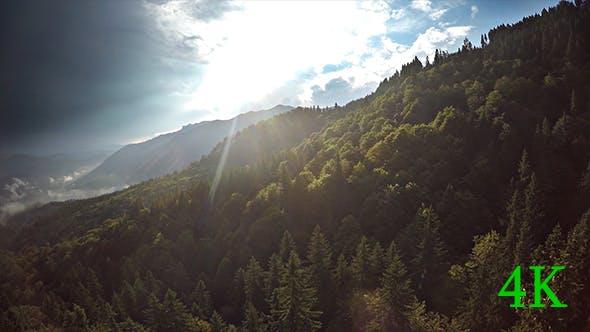 Thumbnail for Luftaufnahme von Wald mit herrlicher Sonne