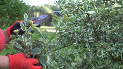 Garden and Pruning