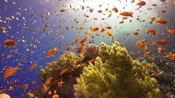 Cover Image for Tropical Fish On Vibrant Coral Reef