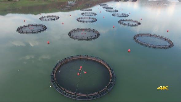 Thumbnail for Farm Fishing