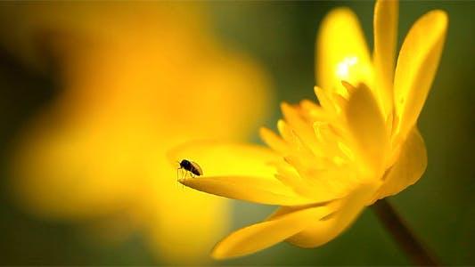 Thumbnail for Spring Flowers